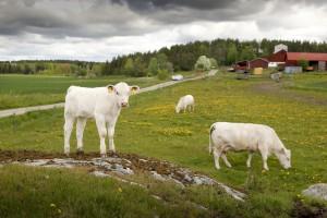 Foto: Göran Svensson, Traktor / TraktorVärlden