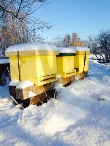 bikupor på vintern